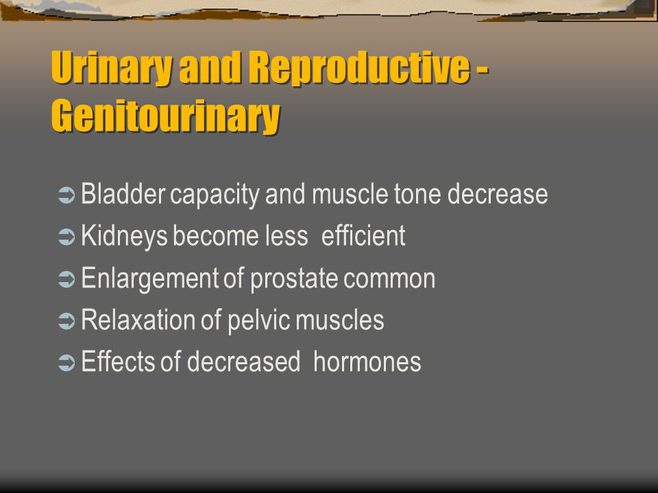 Urinary and Reproductive - Genitourinary Bladder capacity and muscle tone decrease Kidneys become less efficient Enlargement of prostate common Relaxa