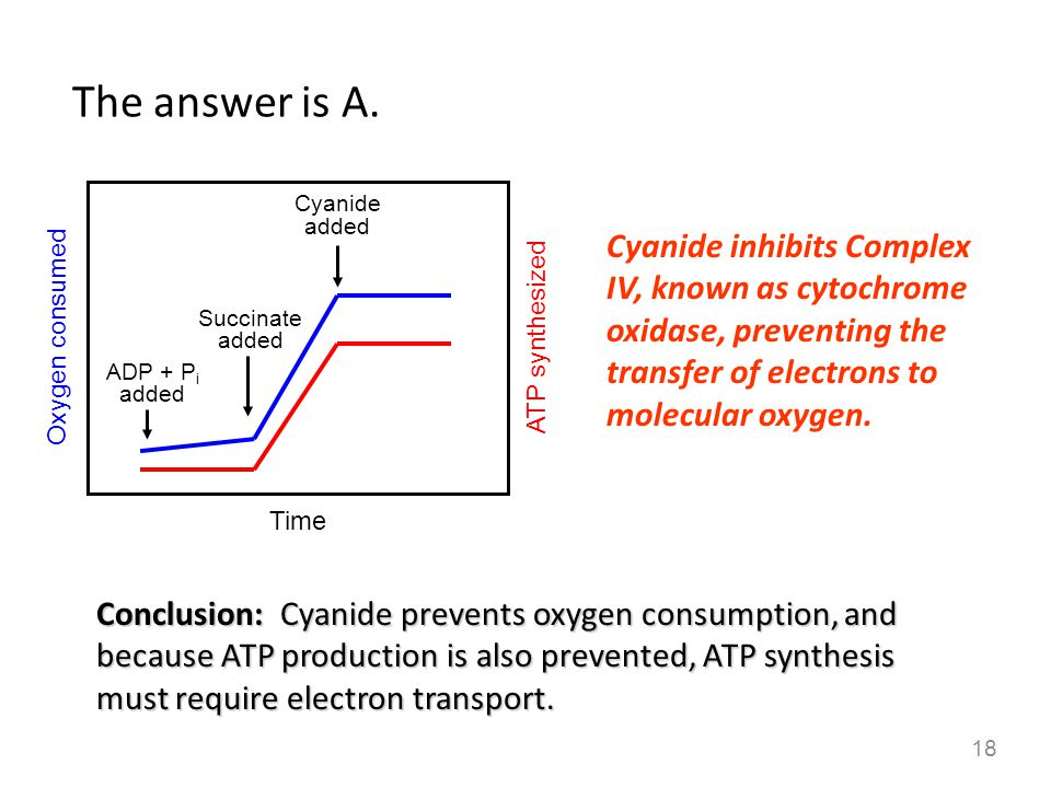 Conclusion: Cyanide prevents oxygen consumption, and because ATP production is also prevented, ATP synthesis must require electron transport. Cyanide