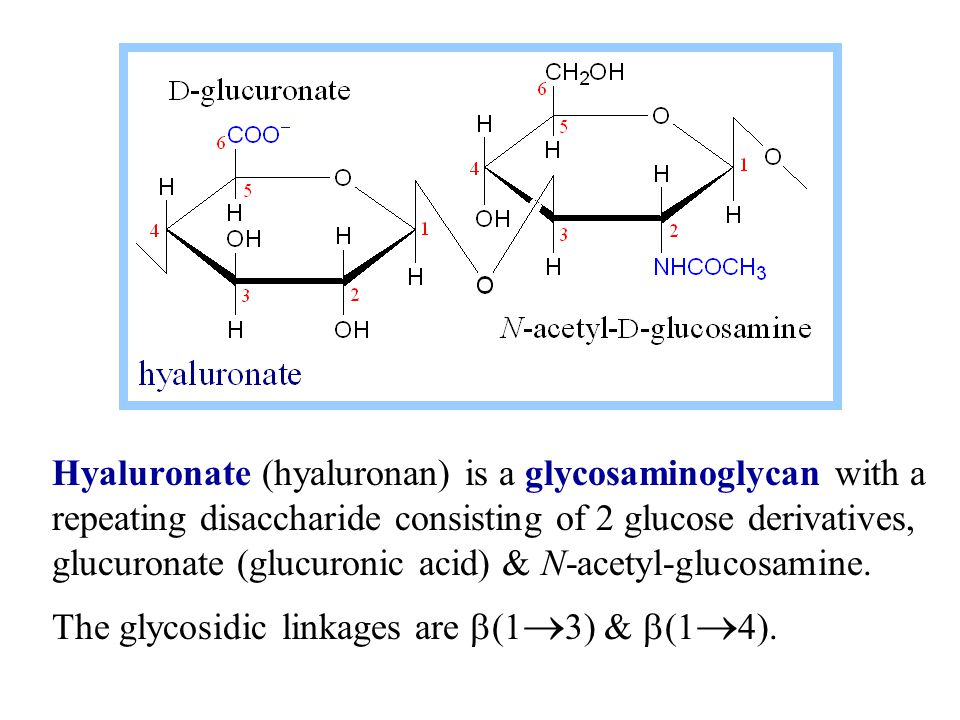 Hyaluronate (hyaluronan) is a glycosaminoglycan with a repeating disaccharide consisting of 2 glucose derivatives, glucuronate (glucuronic acid) & N-a