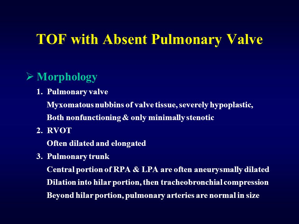 TOF with Absent Pulmonary Valve Morphology 1. Pulmonary valve Myxomatous nubbins of valve tissue, severely hypoplastic, Both nonfunctioning & only min