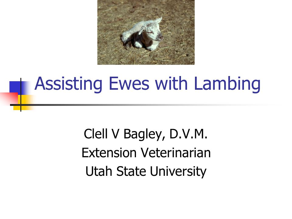 Assisting Ewes with Lambing Clell V Bagley, D.V.M. Extension Veterinarian Utah State University