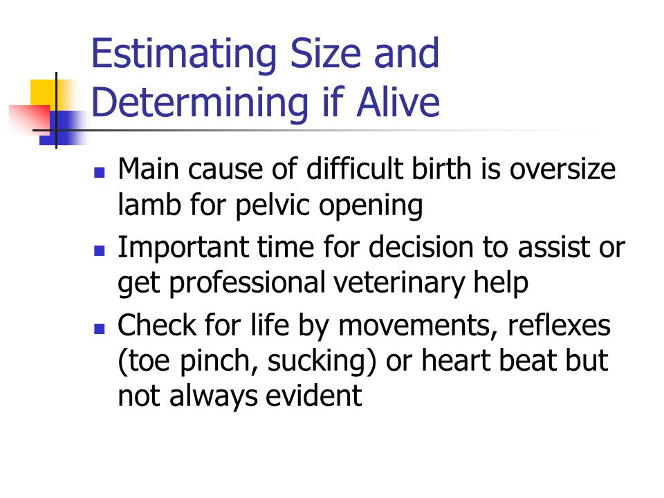 Estimating Size and Determining if Alive Main cause of difficult birth is oversize lamb for pelvic opening Important time for decision to assist or ge
