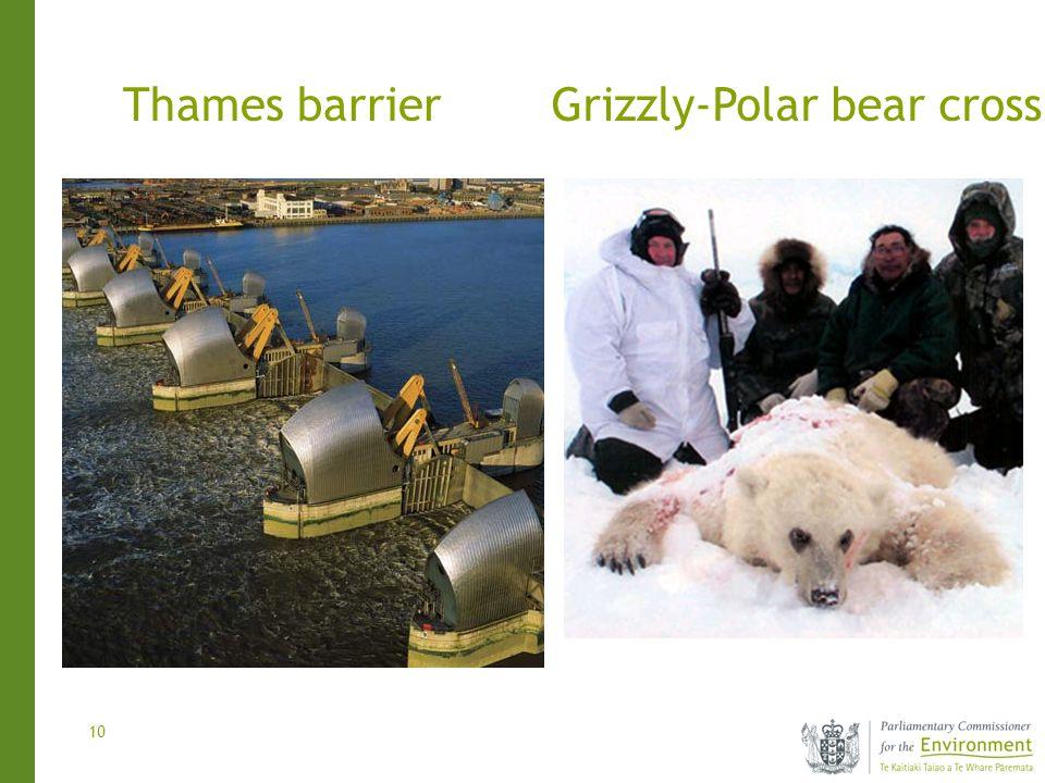 10 Thames barrierGrizzly-Polar bear cross