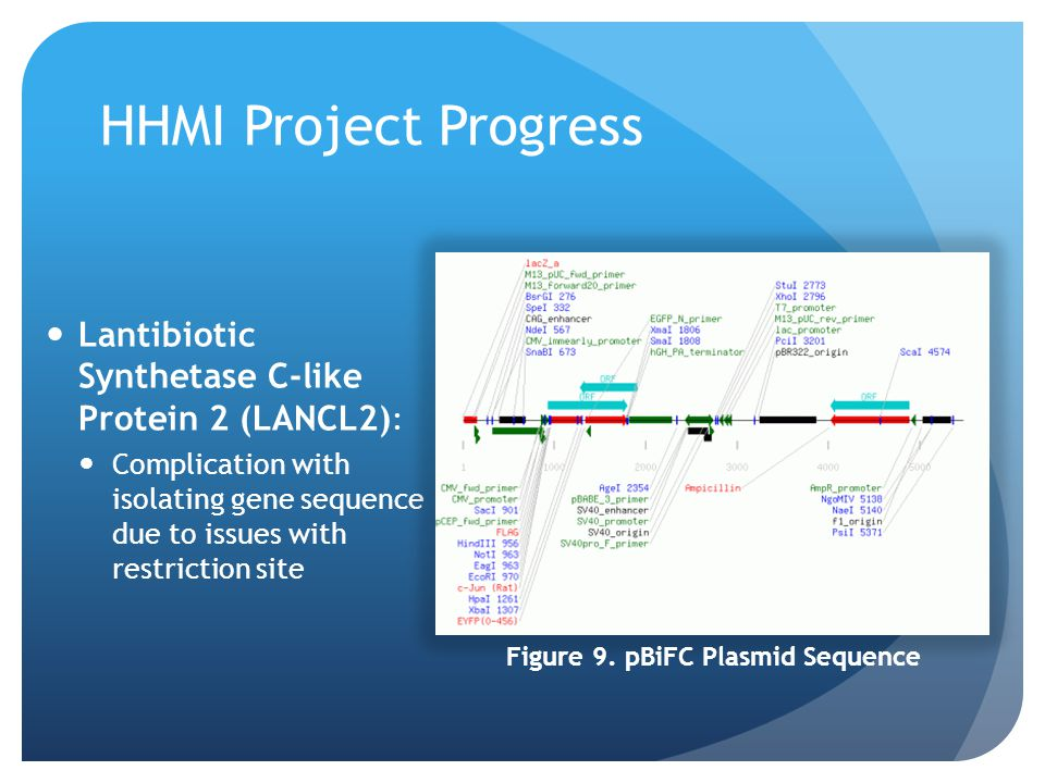 HHMI Project Progress Lantibiotic Synthetase C-like Protein 2 (LANCL2) : Complication with isolating gene sequence due to issues with restriction site