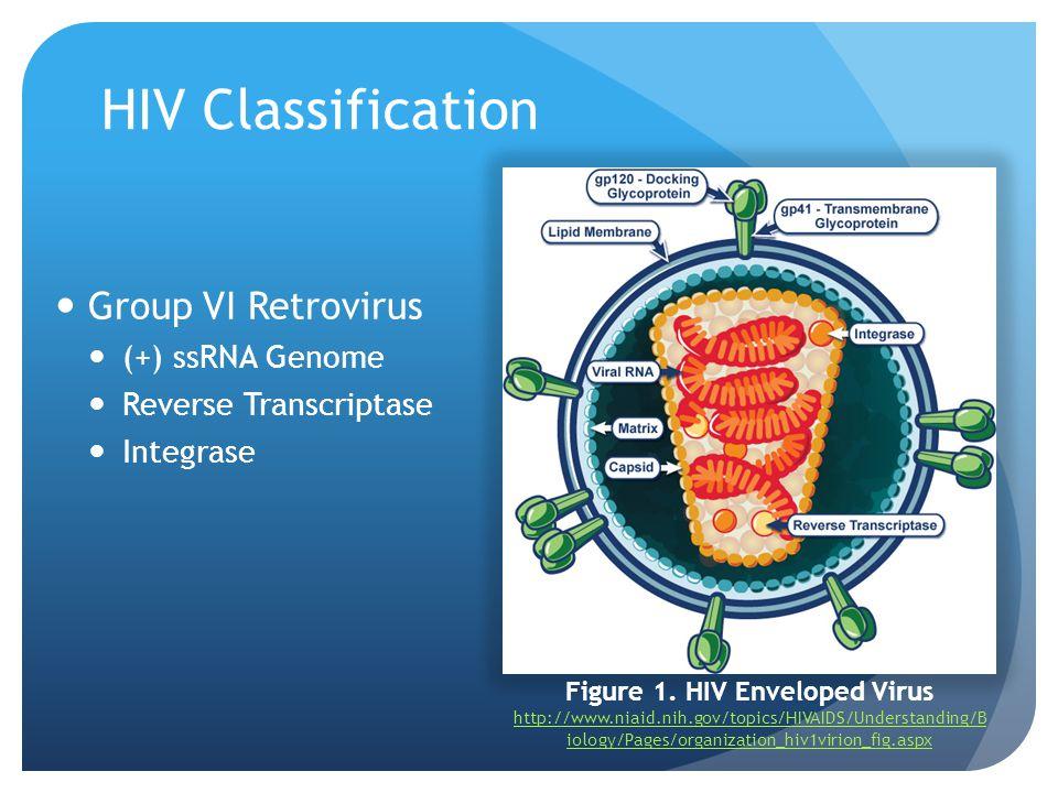 HIV Classification Group VI Retrovirus (+) ssRNA Genome Reverse Transcriptase Integrase Figure 1. HIV Enveloped Virus http://www.niaid.nih.gov/topics/
