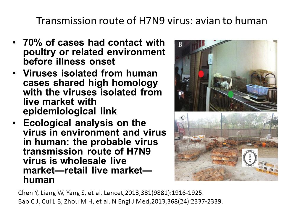 Poultry: Probable Source of H7N9 Virus Infection Probable animal reservoir chicken, duck, pigeon Pig: tested negative (-) ProvincechickenduckpigeonenvironmentTotal Shanghai1003720 Jiangsu1102013 Zhejiang820010 Anhui01001 Henan00022 Shandong00033 Jiangxi10001 Guangdong10001 Fujian00011 Total31351352 Data Source: Animals H7N9 surveillance results released by MOA