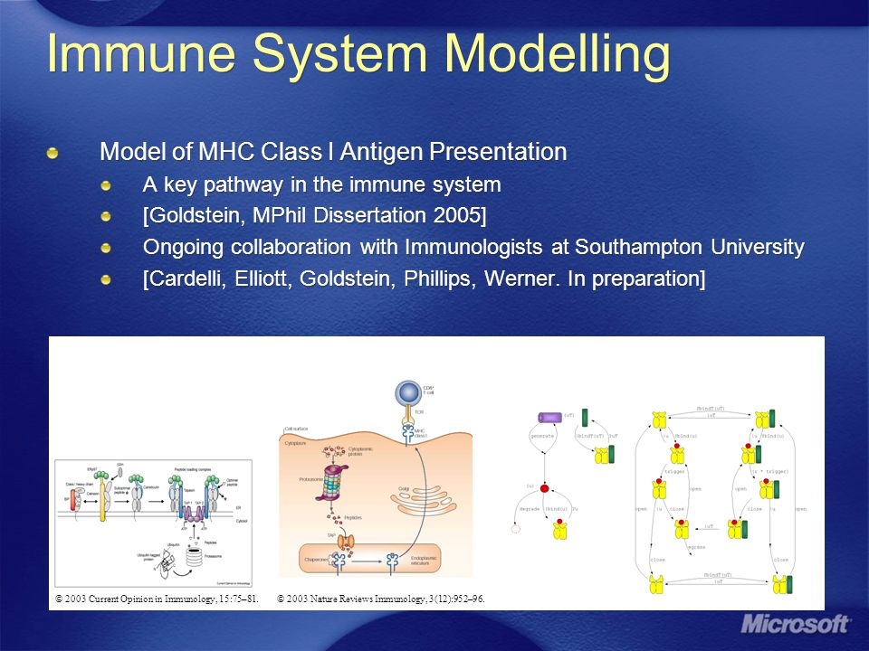 Immune System Modelling Model of MHC Class I Antigen Presentation A key pathway in the immune system [Goldstein, MPhil Dissertation 2005] Ongoing collaboration with Immunologists at Southampton University [Cardelli, Elliott, Goldstein, Phillips, Werner.