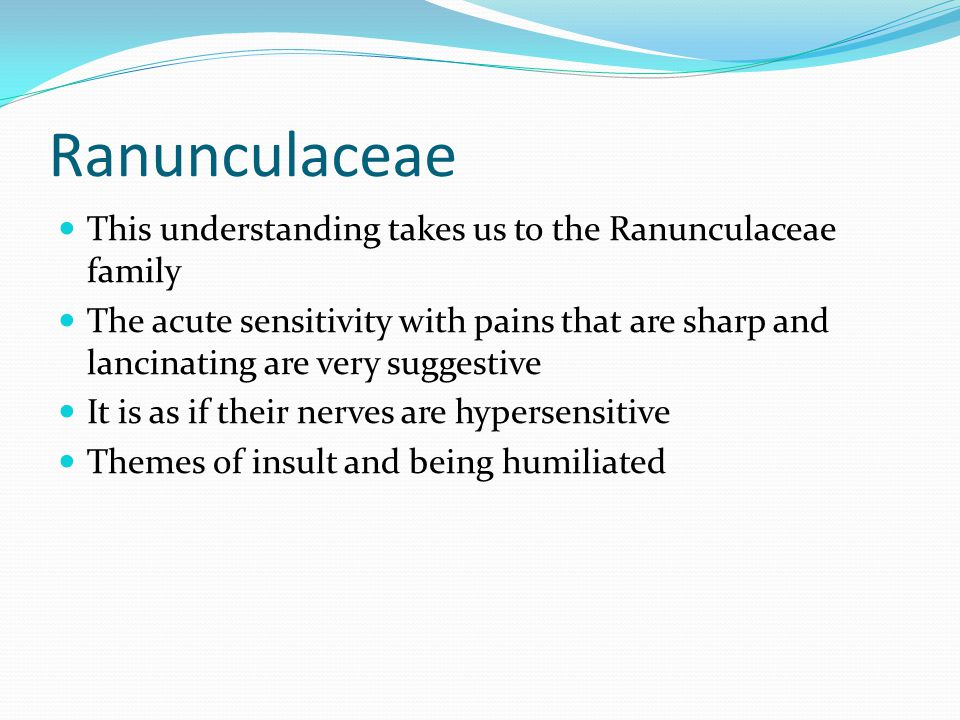 Ranunculaceae This understanding takes us to the Ranunculaceae family The acute sensitivity with pains that are sharp and lancinating are very suggestive It is as if their nerves are hypersensitive Themes of insult and being humiliated