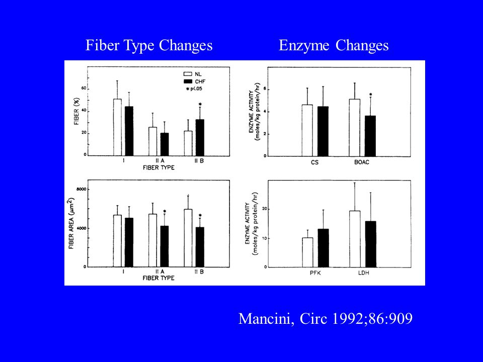 Enzyme ChangesFiber Type Changes