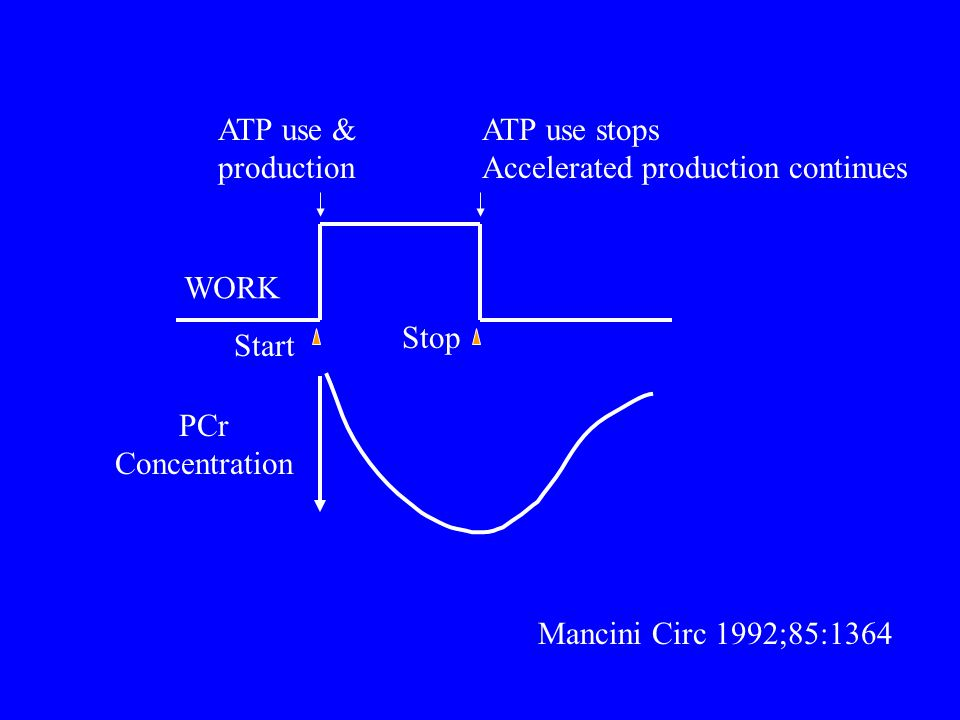 PCr Concentration ATP use & production ATP use stops Accelerated production continues WORK Start Stop Mancini Circ 1992;85:1364
