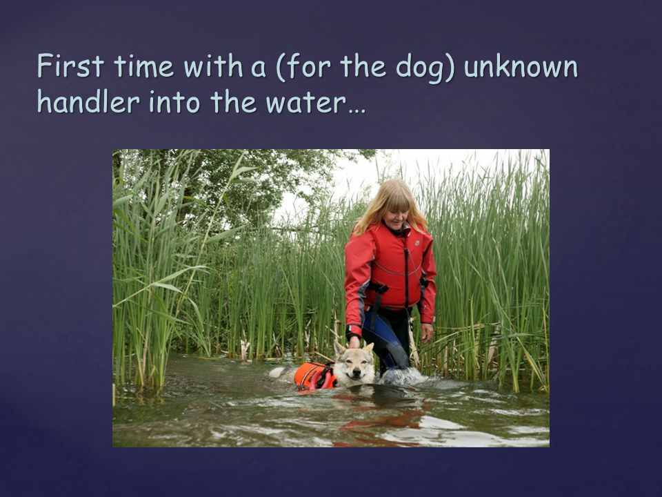 First time with a (for the dog) unknown handler into the water…