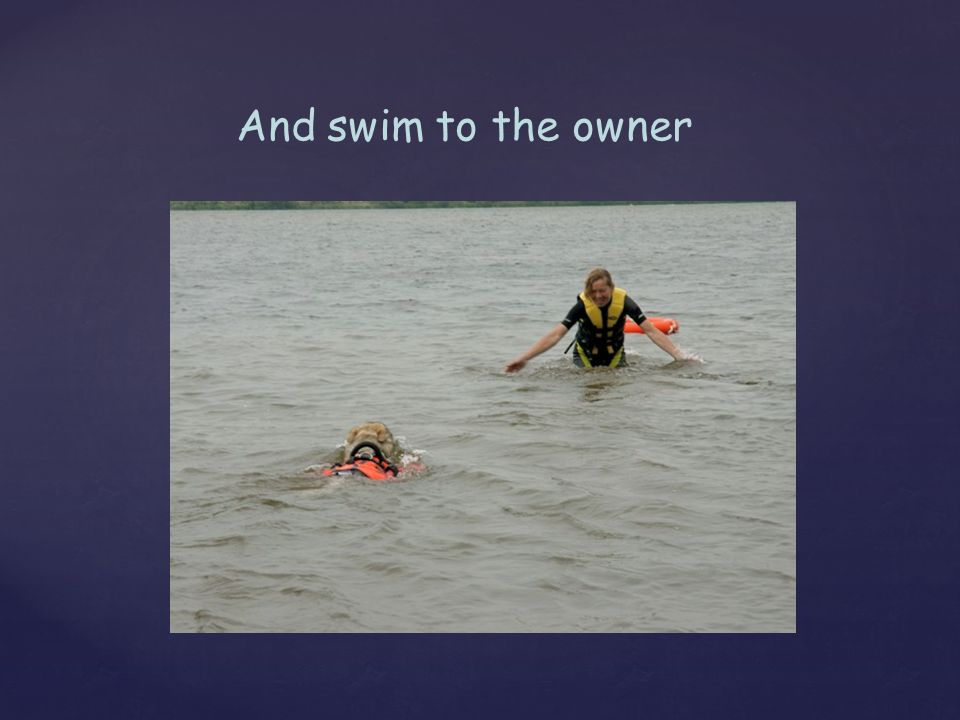 And swim to the owner