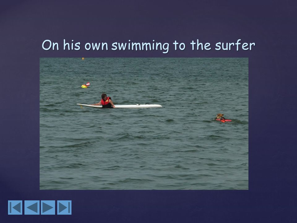 On his own swimming to the surfer