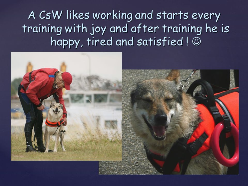 A CsW likes working and starts every training with joy and after training he is training with joy and after training he is happy, tired and satisfied
