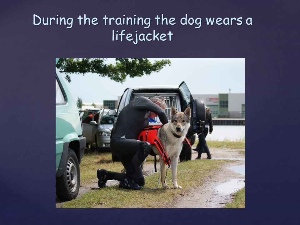 During the training the dog wears a lifejacket