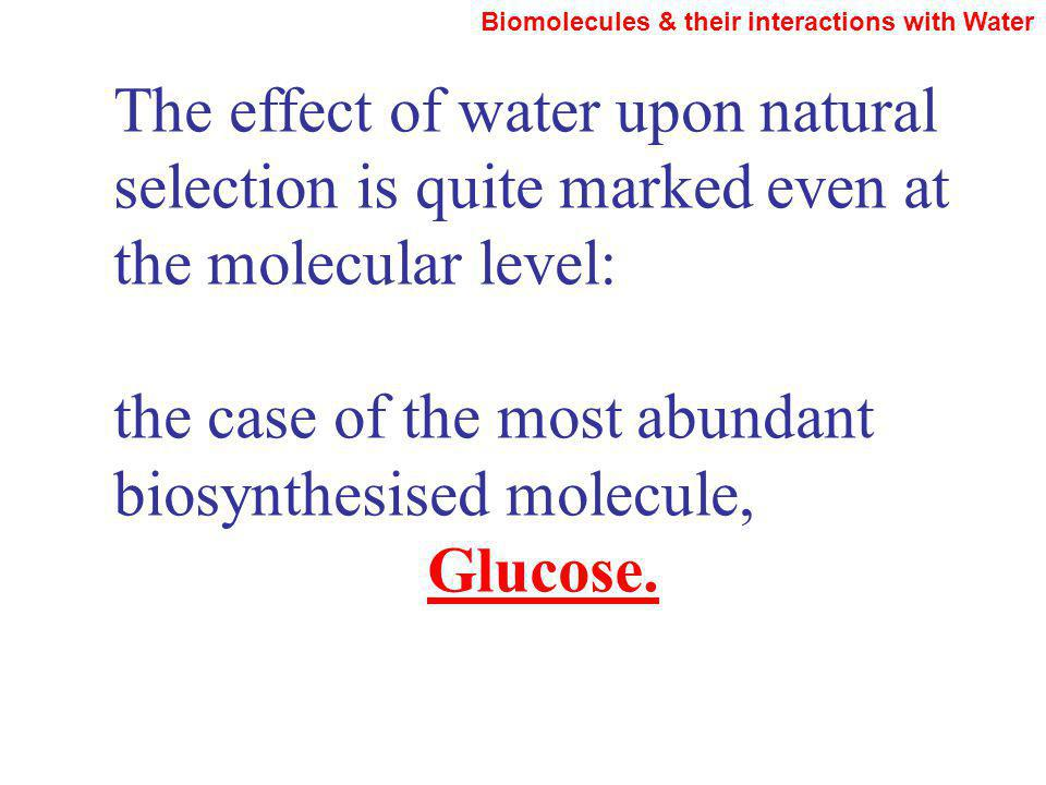 The effect of water upon natural selection is quite marked even at the molecular level: the case of the most abundant biosynthesised molecule, Glucose.