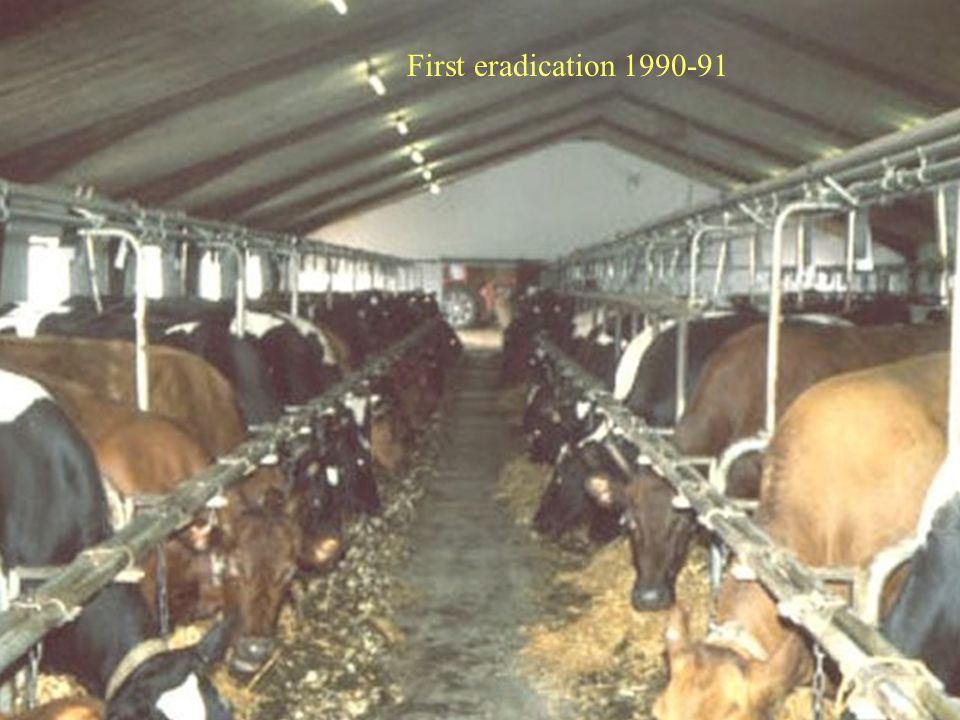 First eradication 1990-91