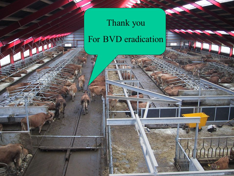 Thank you For BVD eradication