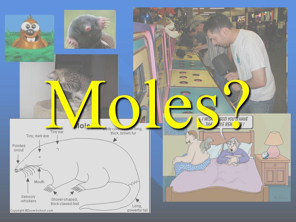 Moles?