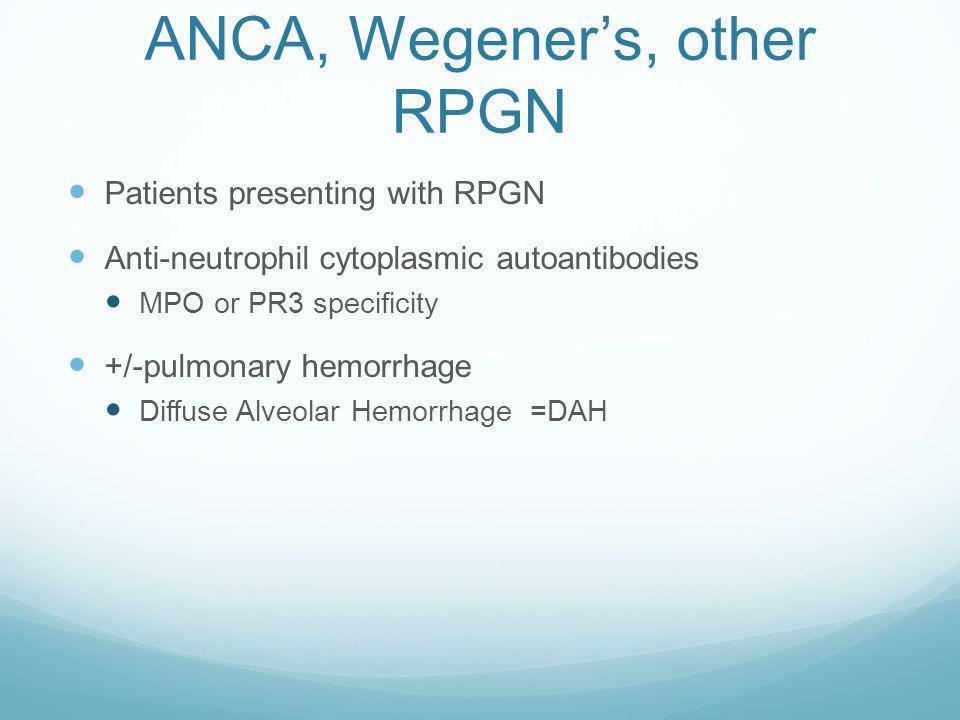 Wegeners Granulomatosis, ANCA, etc. Necrotizing granulomatous vasculitis, C-ANCA positive