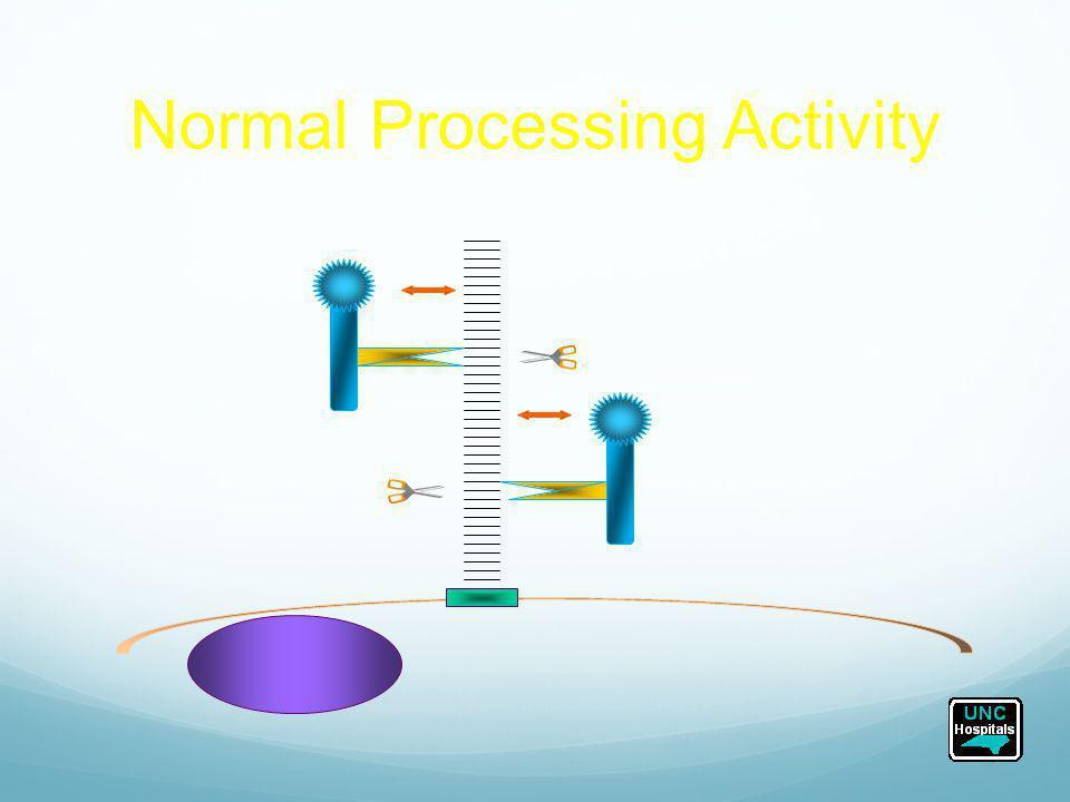 Normal Processing Activity P-selectin ULvWF Weibel-Palade Body