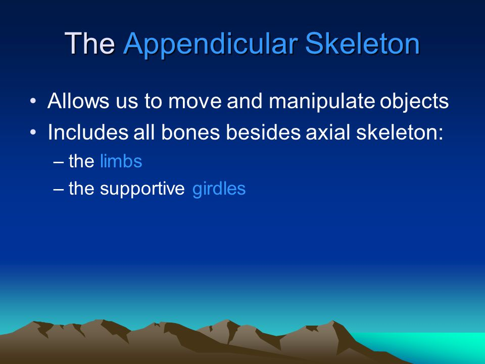 SUMMARY (1 of 3) Components of the: –appendicular skeleton –pectoral girdle, and relationship to axial skeleton –upper limbs, and relationship to pectoral girdle