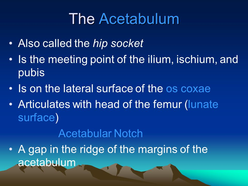 The Acetabulum Also called the hip socket Is the meeting point of the ilium, ischium, and pubis Is on the lateral surface of the os coxae Articulates