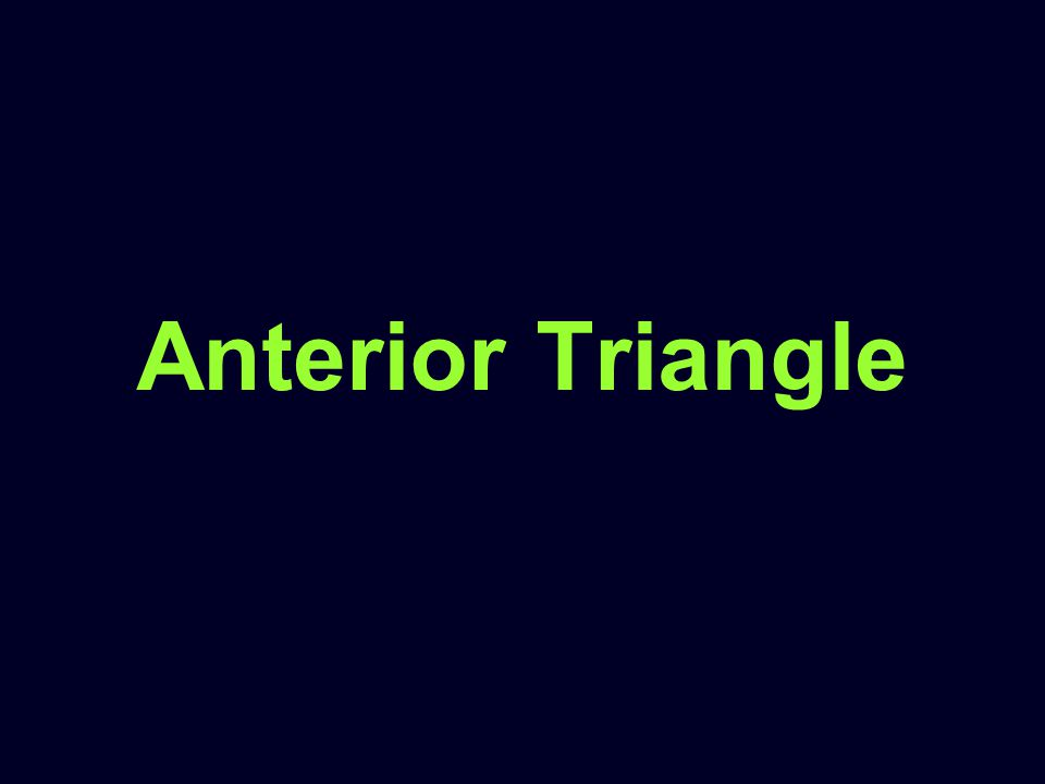 Anterior Triangle