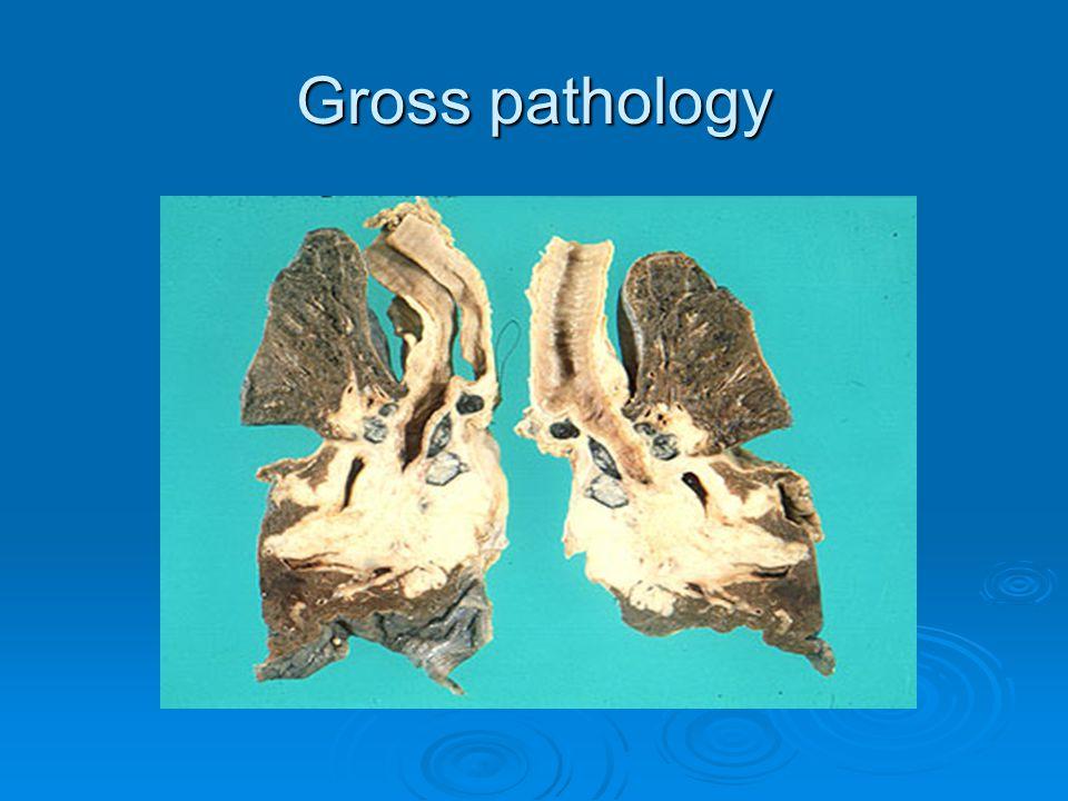Gross pathology