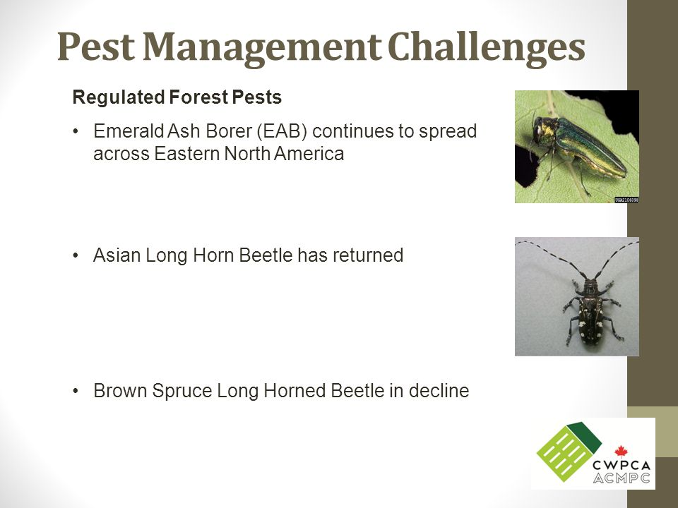Pest Management Challenges Regulated Forest Pests Emerald Ash Borer (EAB) continues to spread across Eastern North America Asian Long Horn Beetle has returned Brown Spruce Long Horned Beetle in decline