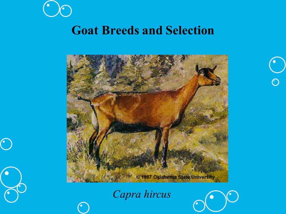 Goat Breeds and Selection Capra hircus