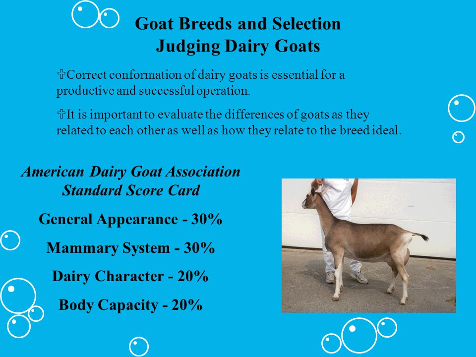 Goat Breeds and Selection Judging Dairy Goats UCorrect conformation of dairy goats is essential for a productive and successful operation. UIt is impo