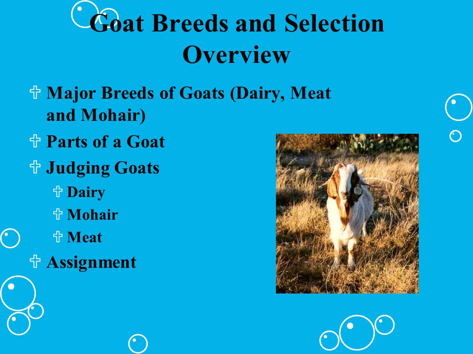 Goat Breeds and Selection Overview UMajor Breeds of Goats (Dairy, Meat and Mohair) UParts of a Goat UJudging Goats UDairy UMohair UMeat UAssignment