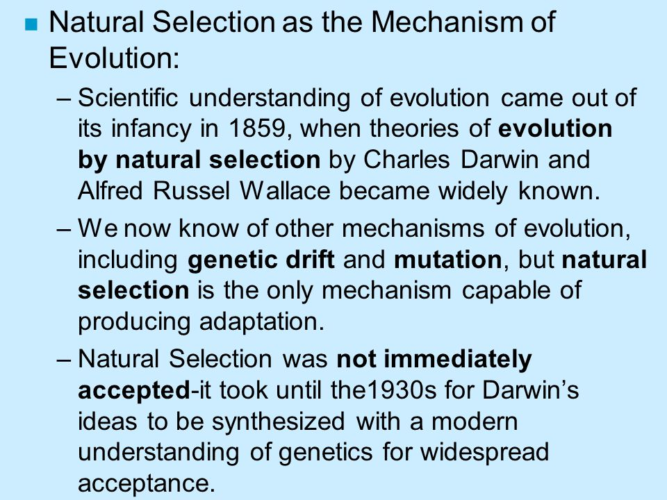 understanding evolutionary misunderstanding essay Tell students that their assessment assignment is to describe the history of evolutionary theory students can choose to demonstrate their understanding and knowledge in any appropriate format, such as video, illustrations, poster, essay, or diorama.