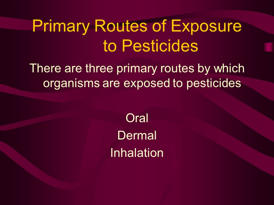 Primary Routes of Exposure to Pesticides There are three primary routes by which organisms are exposed to pesticides Oral Dermal Inhalation