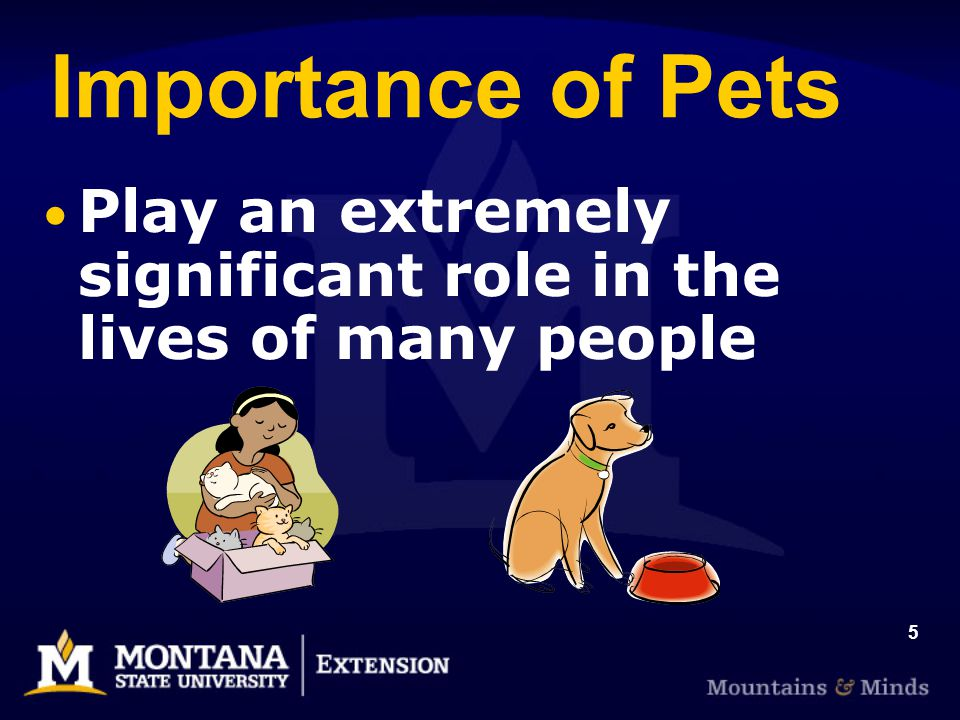 5 Importance of Pets Play an extremely significant role in the lives of many people