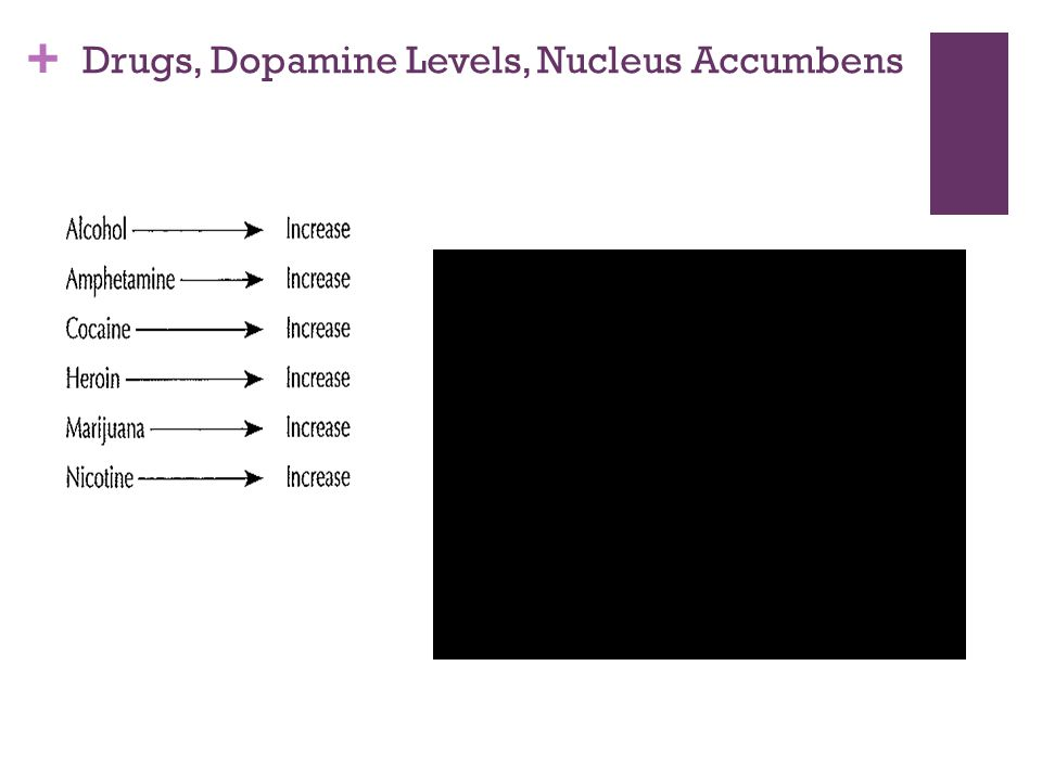 + Drugs, Dopamine Levels, Nucleus Accumbens