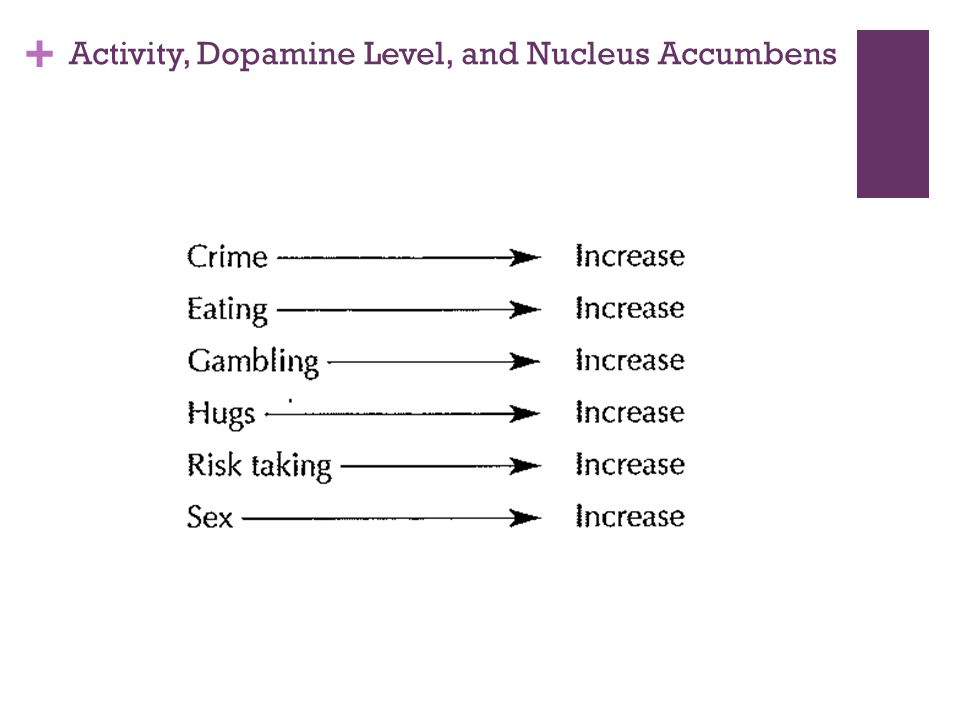 + Activity, Dopamine Level, and Nucleus Accumbens