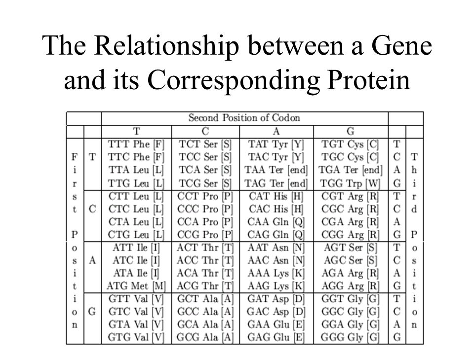 15 The Relationship between a Gene and its Corresponding Protein