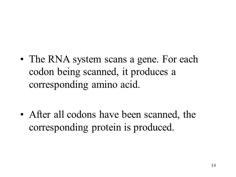 19 The RNA system scans a gene.
