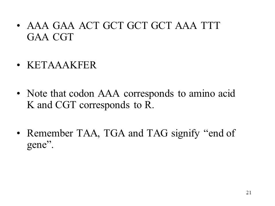 21 AAA GAA ACT GCT GCT GCT AAA TTT GAA CGT KETAAAKFER Note that codon AAA corresponds to amino acid K and CGT corresponds to R. Remember TAA, TGA and