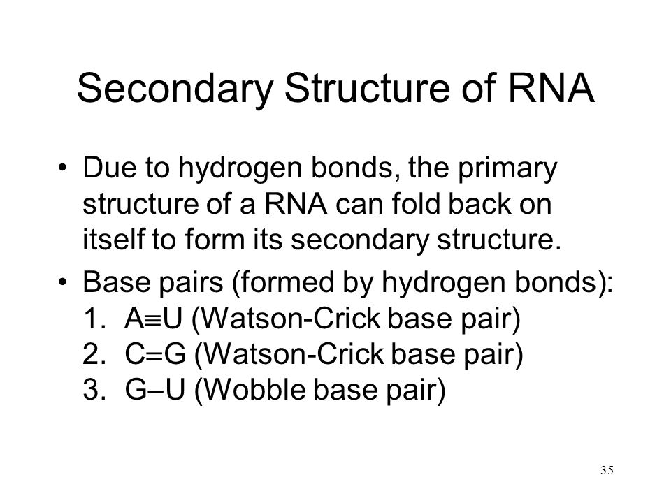 35 Secondary Structure of RNA Due to hydrogen bonds, the primary structure of a RNA can fold back on itself to form its secondary structure. Base pair