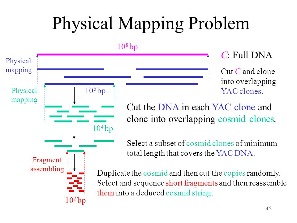45 Physical Mapping Problem Select a subset of cosmid clones of minimum total length that covers the YAC DNA.