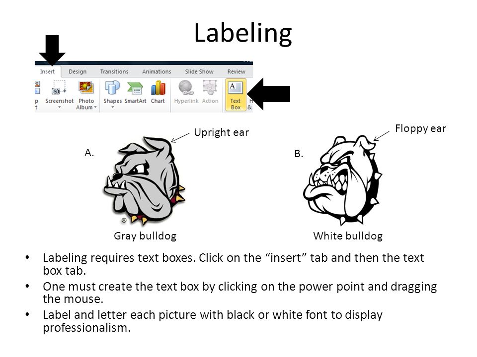 Guide to making description Label each figure with a number and place the label under the picture.