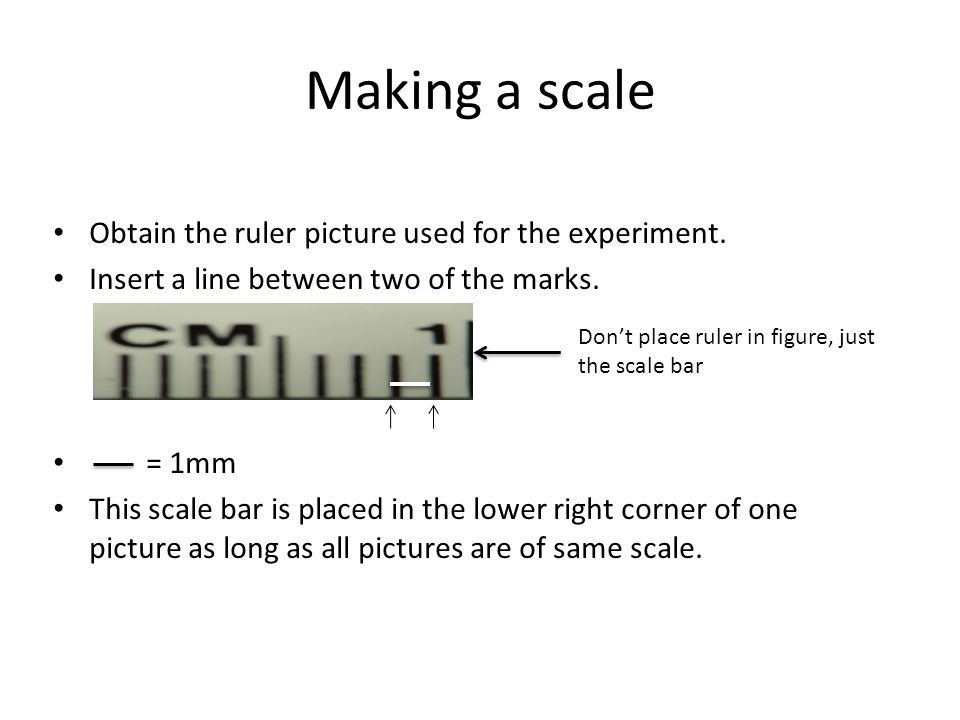 Making a scale Obtain the ruler picture used for the experiment.