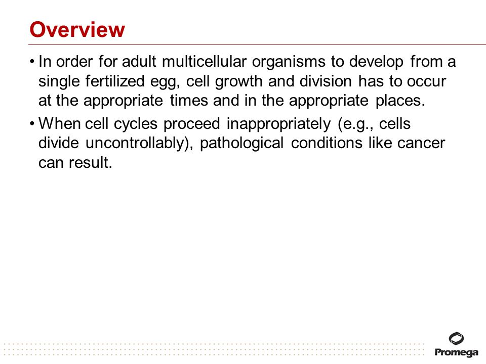 Overview In order for adult multicellular organisms to develop from a single fertilized egg, cell growth and division has to occur at the appropriate