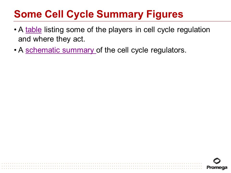 Some Cell Cycle Summary Figures A table listing some of the players in cell cycle regulation and where they act.table A schematic summary of the cell