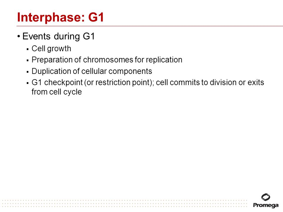 Interphase: G1 Events during G1 Cell growth Preparation of chromosomes for replication Duplication of cellular components G1 checkpoint (or restrictio