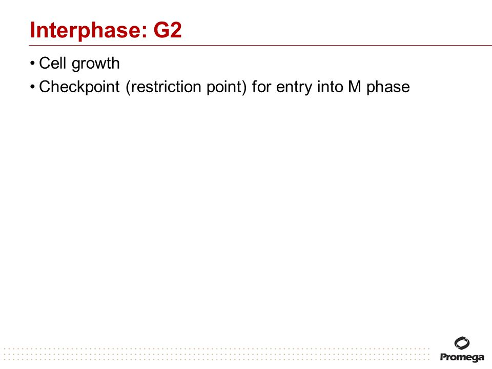 Interphase: G2 Cell growth Checkpoint (restriction point) for entry into M phase