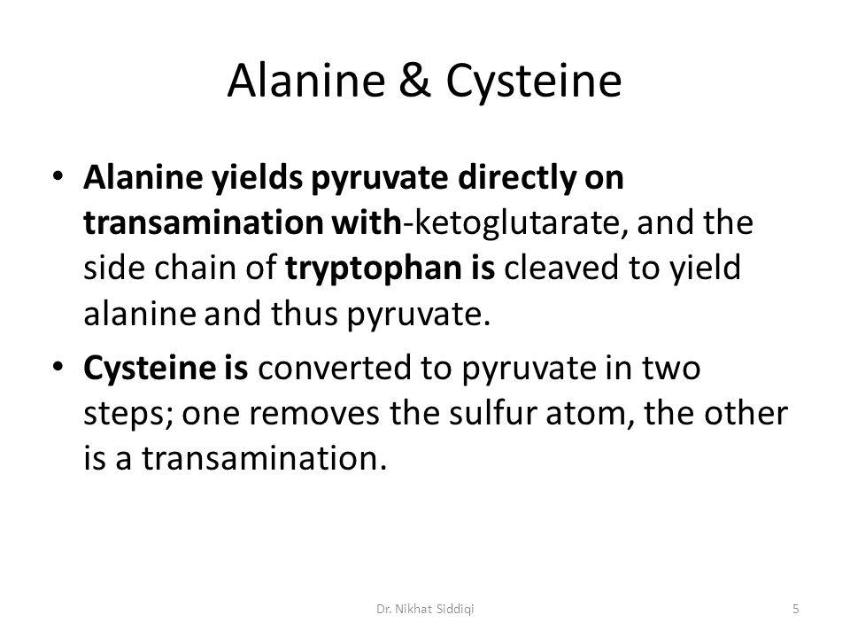 Cysteine Two pathways of catabolism The direct oxidative (cysteine sulfinate) pathway.